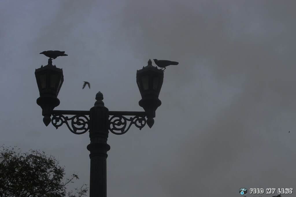 Street lamps and Crow