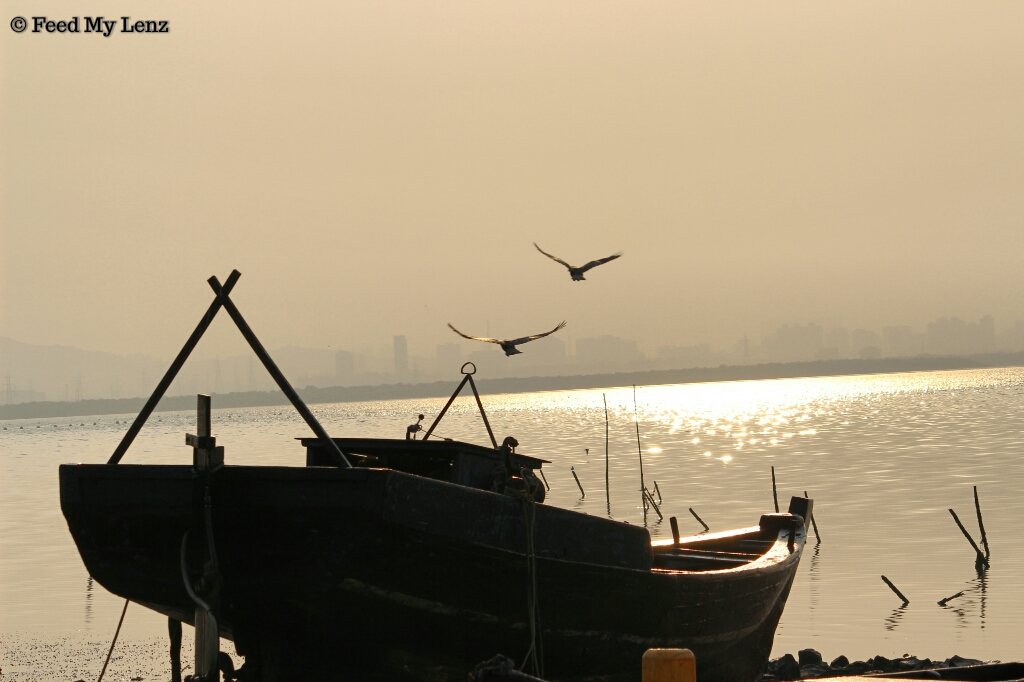 vashi-creek-6